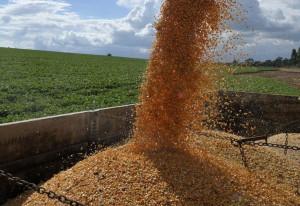 importação de soja